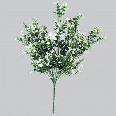 White Tipped Money Leaf Stem 32 Cm
